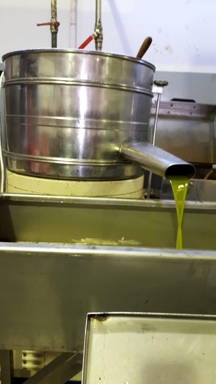 Olivellas etcesana